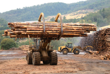 Forest machinery sales surge as operators' focal point shifts to precision forestry practices